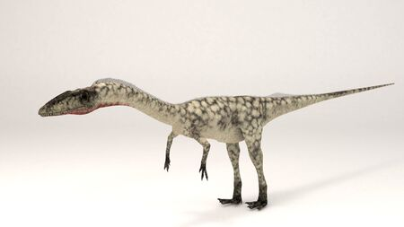 3D Computer rendering illustration of Coelophysis