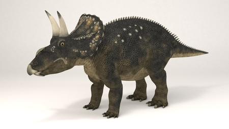 3D Computer rendering illustration of Diceratops