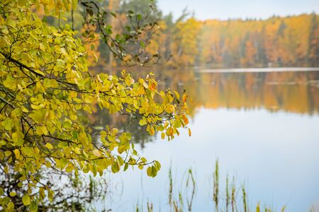 Serene Scandinavian autumn landscape of Southern Finland, Espoo. Colorful forest reflecting in calm lake water. Fallen leaves on water surface.