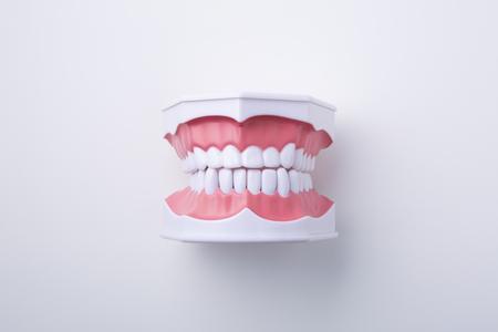 Teeth model on white background