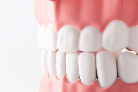 Close-up of an oral model in front of a white background
