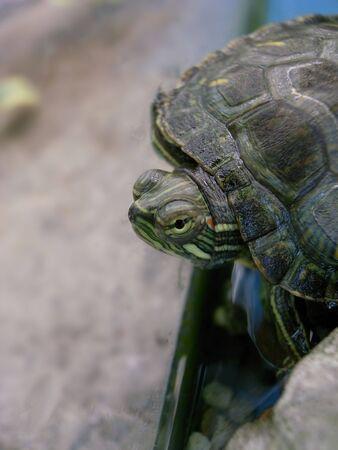 est: green turtle                                             Stock Photo