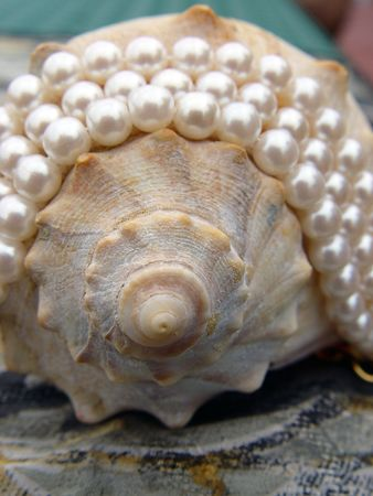 Conch sea shell adorned with 6.5-7mm pearl strands. Imagens