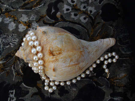 Conch Seashell covered with pearls on a black silk scarf.