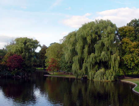 Beautiful Willow trees in the Boston Public Gardens on a cloudy fall day. photo