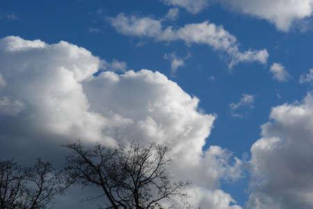 木々 が風に曇りの日にニュー イングランドで。 写真素材