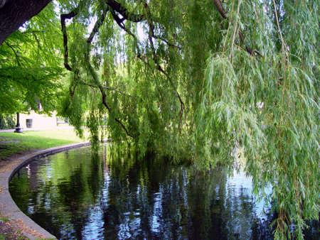 Old willow tree shading the Boston Public Garden pond.