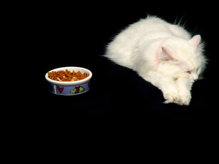 catfood: White Angora cat ignoring her food and taking a nap instead of eating. Stock Photo