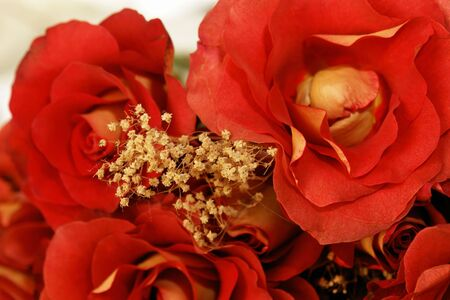 Beautiful yellow and red hybrid roses closeup laying down