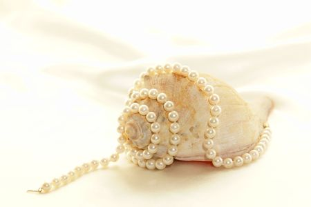 Beautiful brown  and white conch shell against a white satin background with pearls