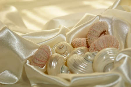 smooth: Collection of sea shells on soft white satin background