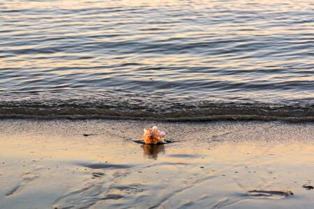 Large conch sea shell on the shore of the ocean as the tide comes in, in bright sunshine with reflection