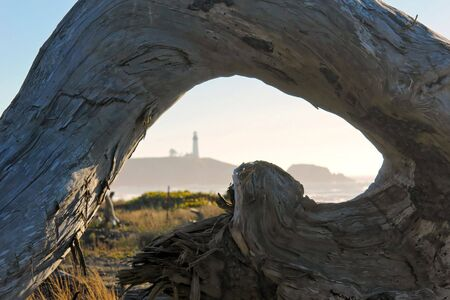 curved section of driftwood filling frame with lighhouse in the background