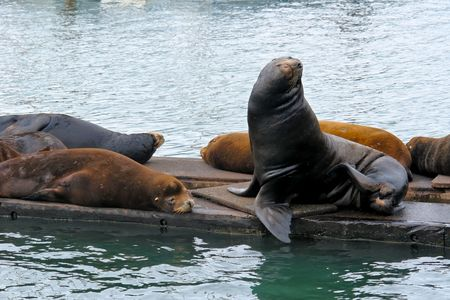 group of sea lions sitting on pier  on the coast of oregon
