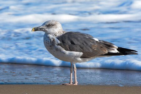 Bird on the Beach with Waves behind