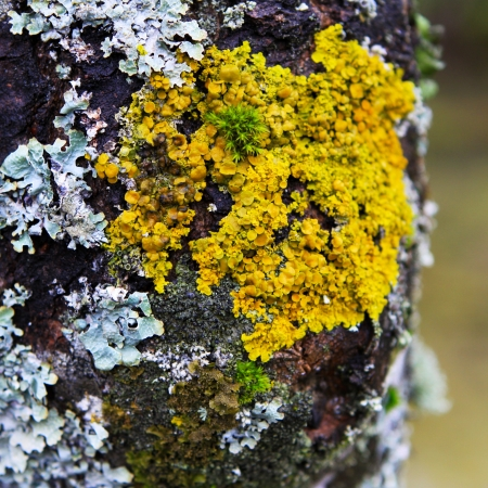 moss and lichens on a tree