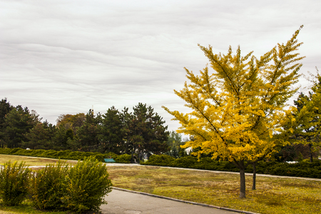 Park in the fall landscape, nature yellow, tree