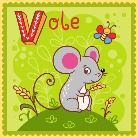 Illustrated alphabet letter V and vole. Vector picture with cartoon animals.