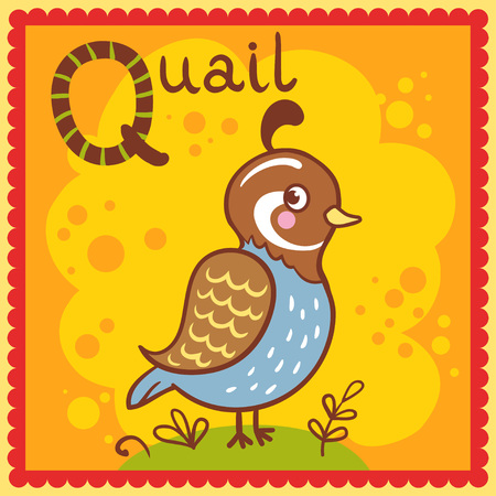 Illustrated alphabet letter Q and quail. Vector picture with cartoon animals.