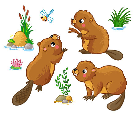 beavers: Vector set with isolated beavers in different poses. Cute animals in cartoon style.