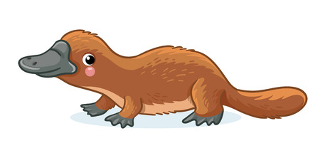 Platypus on a white background. Lovely Australian animal. Vector illustration in childrens style.