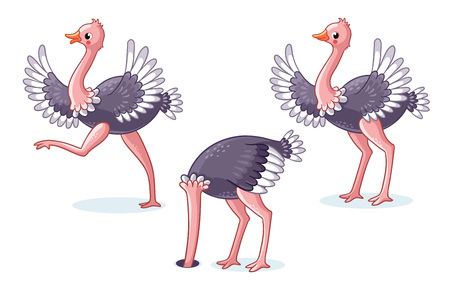 Set of ostriches in different poses. Cute bird on a white background in cartoon style. Vector illustration on a childrens theme.