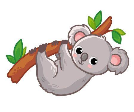 Koala cuelga de un árbol sobre un fondo blanco. Lindo animal australiano en un estilo de dibujos animados. Ilustración vectorial.