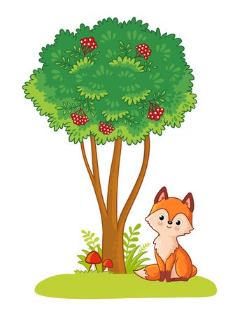 Fox sits in a clearing next to a green tree on a white background. Vector illustration with animal and mountain ash in cartoon style.
