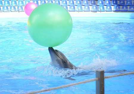 dolphin playing with ball in dolphinarium.
