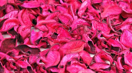 Pink petals background. photo