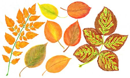 Hand drawn watercolor foliage autumn leaves. Imagens - 40033518