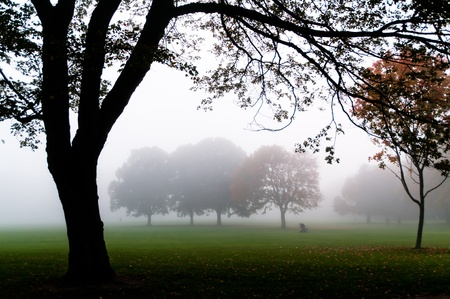 Trees in the fog framed by other trees Stock Photo