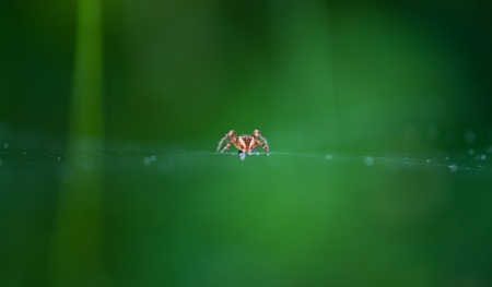 Spider hanging with drops in net photo