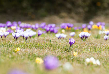 spring flowers in a grassfield Stock Photo