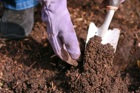 Woman gardening with gloved hand and white shovel Stock Photo