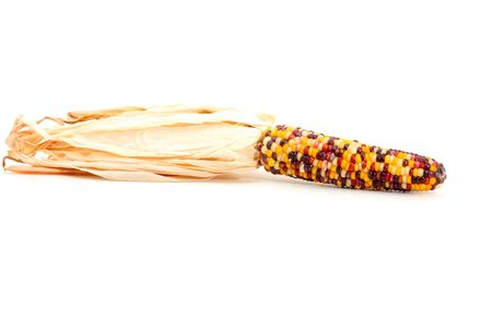 Colorful traditional Thanksgiving corn, isolated on white