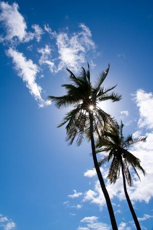 Palm trees silhouette on beautiful blue sky with white fluffy clouds Stock Photo