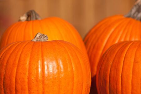 Four large orange pumpkins ready to be carved