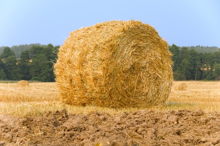 Meadow of hay bales  photo
