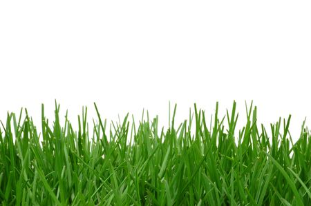 Grass isolated on a white background. White area great for added text. Stock Photo