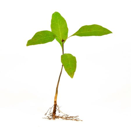 Young plant on white background