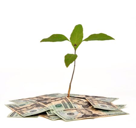 Plant growing from a pile of money on a white background 版權商用圖片