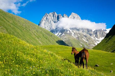マウンテン バレーの美しい馬です。背景には Chauchi の山の範囲のピーク 写真素材