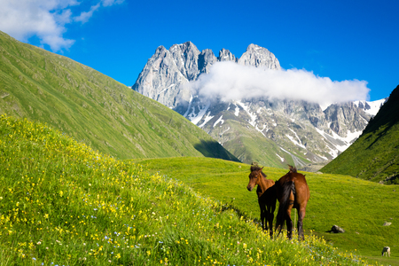 Beautiful horses in the mountain valley. In the background are the peaks of the mountain range of Chauchi Stock fotó