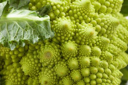 coliflor: coliflor rom�nica Foto de archivo