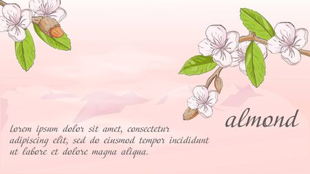 plant banner nature plant almond branch fruit nuts flowers for decoration design on the background of mountains with clouds with a place for text and name vector EPS 10