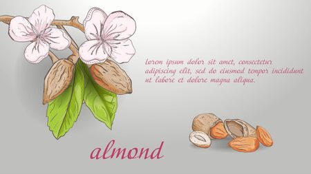 plant banner nature plant almond branch fruit nuts flowers for decoration design background isolated with space for text and title vector Ilustração
