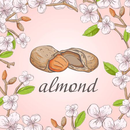 nature plant almond branch fruit nuts flowers for decoration design vector EPS 10