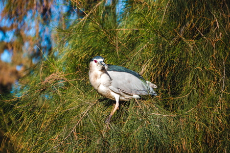 bird of israel: bird sitting on the branch Stock Photo