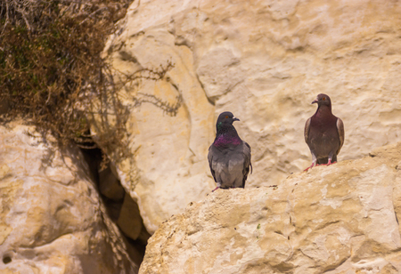 hanikra: two pigeons sitting on a rock and looking at each other Stock Photo